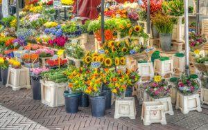 שוק הפרחים אמסטרדם
